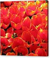 Tulips - Field With Love 28 Canvas Print