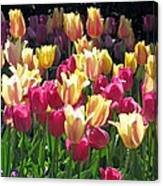 Tulips - Field With Love 35 Canvas Print