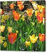 Tulips - Field With Love 41 Canvas Print