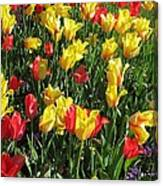 Tulips - Field With Love 49 Canvas Print