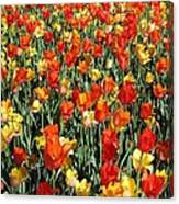 Tulips - Field With Love 51 Canvas Print