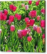 Tulips - Field With Love 54 Canvas Print