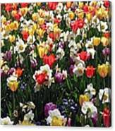 Tulips - Field With Love 57 Canvas Print