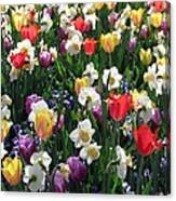 Tulips - Field With Love 58 Canvas Print