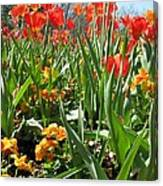 Tulips - Field With Love 64 Canvas Print
