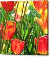 Tulips - Field With Love 69 Canvas Print