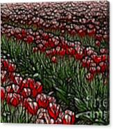 Tulips Fields Are Forever Canvas Print