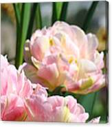Tulips Flowers Garden Art Prints Pink Tulip Floral Canvas Print