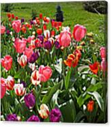 Tulips Garden Art Prints Colorful Spring Floral Canvas Print
