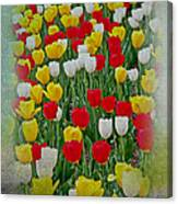 Tulips In A Field Canvas Print
