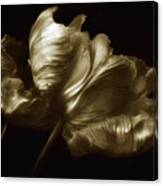 Tulips In Sepia Canvas Print