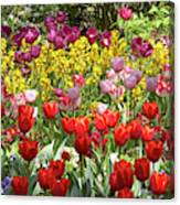 Tulips In St James's Park, London Canvas Print