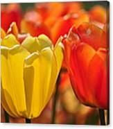 Tulips In The Midst Canvas Print