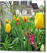 Tulips In Williamsburg Canvas Print