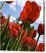 Tulips Leaning Tall Canvas Print