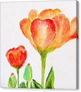 Tulips Orange And Red Canvas Print