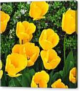 Tulips. Canvas Print