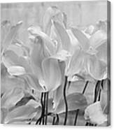 Tulips Oxford Canvas Print