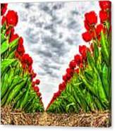 Tulips Part IIi Canvas Print