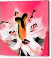 Tulips - Perfect Love - Photopower 2075 Canvas Print