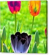 Tulips - Perfect Love - Photopower 2168 Canvas Print