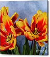 Tulips Radiance Canvas Print