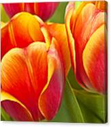 Tulips Red And Yellow Canvas Print