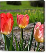 Tulips Red Pink Tulip Flowers Art Prints Canvas Print