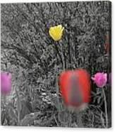 Tulips Reign Canvas Print