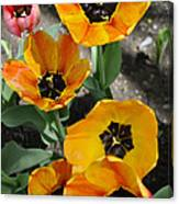 Tulips Tp Canvas Print