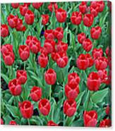 Tulips Tulips And Tulips Canvas Print