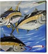 Tuna Attack Canvas Print