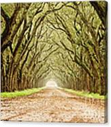 Tunnel In The Trees Canvas Print