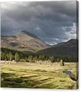 Tuolumne Meadows In Yosemite National Park Canvas Print