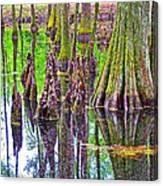 Tupelo/cypress Swamp Reflection At Mile 122 Of Natchez Trace Parkway-mississippi Canvas Print