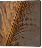 Turkey Feather Canvas Print