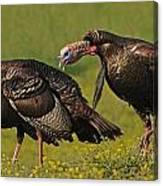 Turkey Gobble Canvas Print