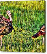 Turkey Pair Canvas Print