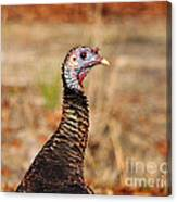 Turkey Profile Canvas Print