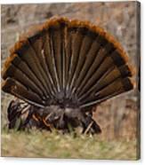 Turkey Tail Canvas Print