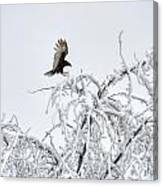 Turkey Vulture In The Snow Canvas Print