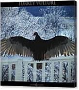Turkey Vulture Sunning Canvas Print