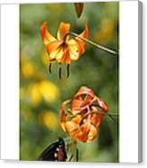 Turks Cap Lilies And Butterfly Canvas Print