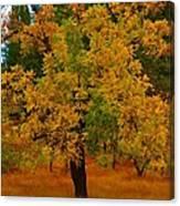 Turning Into Autumn Canvas Print
