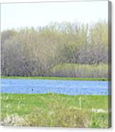 Turquoise Marsh Canvas Print