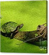 Turtle-190 Canvas Print