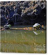 Turtle And Frog On A Log Canvas Print