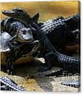 Turtle And Gator Love I Canvas Print