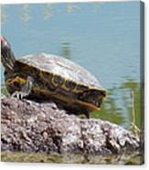 Turtle At The Lake Canvas Print
