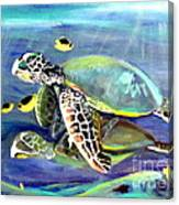 Turtle Duo Canvas Print